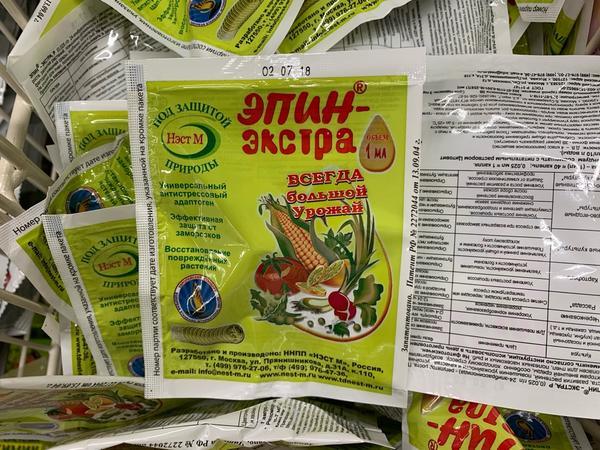 Помидоры Яблонька России: описание и фото