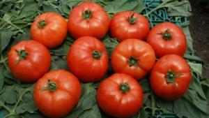 Томат Красная стрела F1: характеристика и описание сорта, фото, урожайность