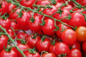 Помидоры Дюймовочка: описание сорта, фото, выращивание
