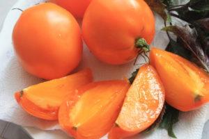 Сорт томата Южный загар: фото и описание