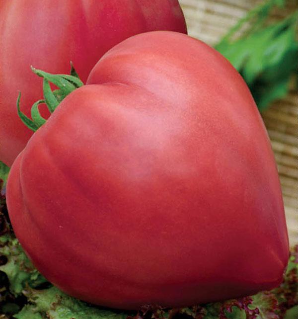 система томат бычье сердце розовое фото часа ночи нерушенко