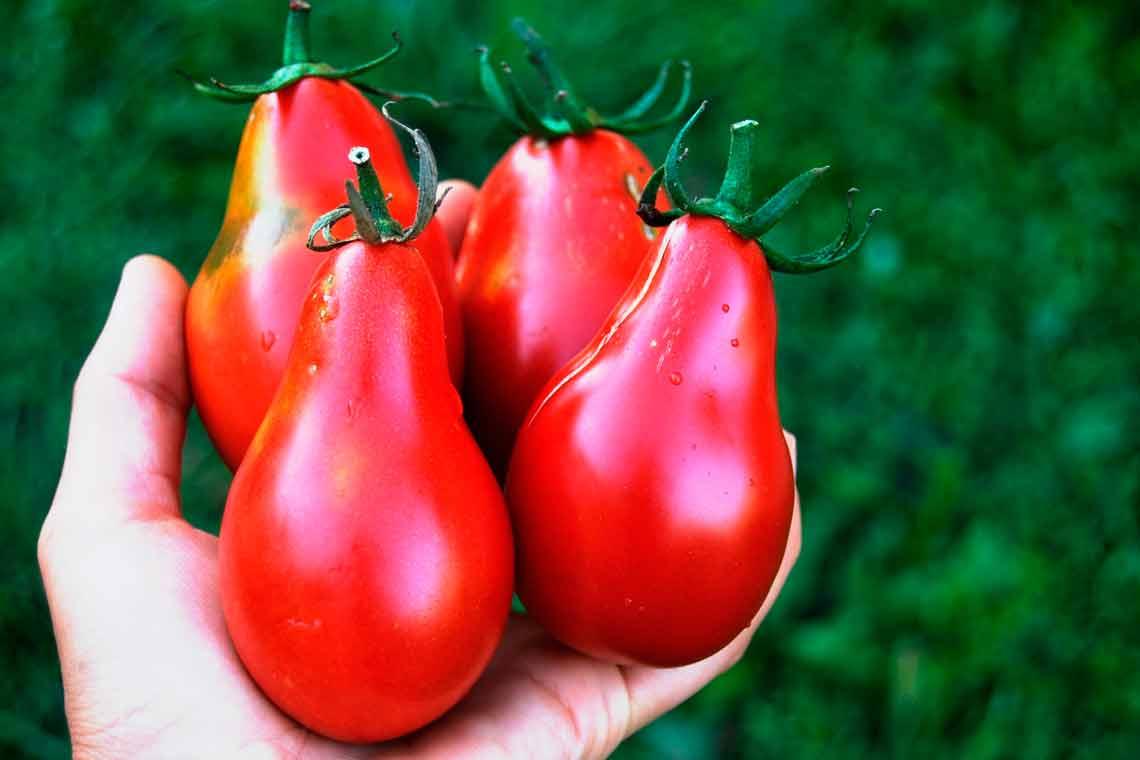 Японская грушовка томат описание