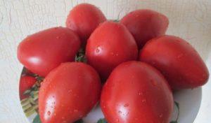 Сорт томатов Земляк: описание и фото