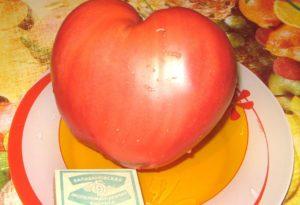 Помидоры Розовый спам: описание сорта с фото