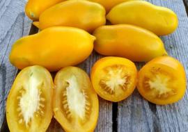 Сорт томата Золотой дождь: описание и фото