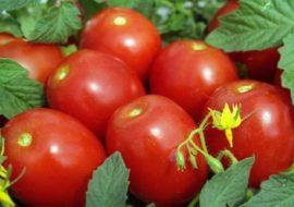 Томат Бенито F1: характеристика и описание сорта, фото, урожайность