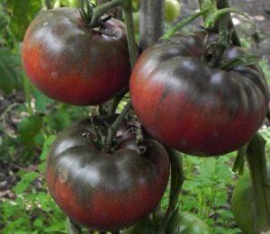 Сорт томата Черный барон: фото и описание