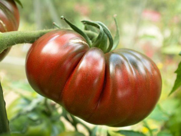 Сорт томата Черный ананас: фото и описание