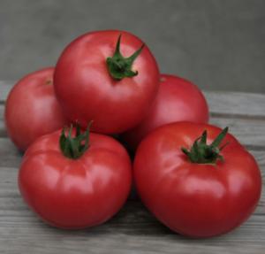 Сорт томата Кибо: описание и фото
