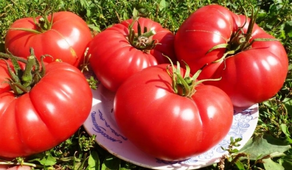 Сорт томата Любящее сердце: фото и описание