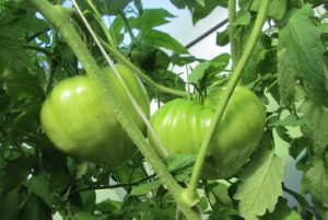 Помидоры Оранжевая клубника: описание сорта, фото, урожайность