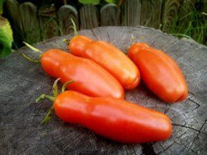Сорт томата Дрова: фото и описание