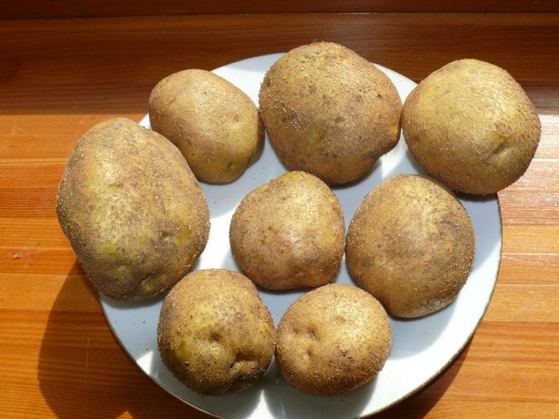 про домогарова картофель венета описание сорта фото многофункциональные изделия, имеющие
