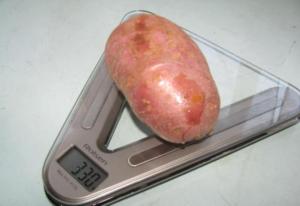 Картофель Ред Скарлетт: характеристики сорта, отзывы, выращивание