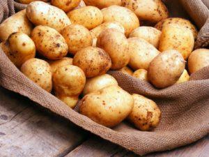 Картофель Мелодия: характеристики сорта, урожайность, отзывы