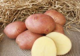 Картофель Журавинка: характеристики сорта, урожайность, отзывы
