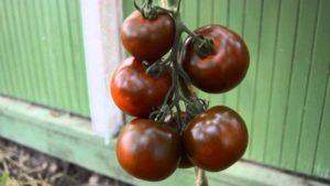 Черные помидоры Кумато: описание сорта, фото, полезные свойства