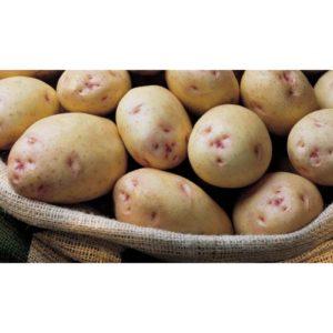 Картофель Аврора: описание сорта, фото, отзывы, посадка и уход