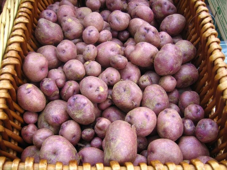 картофель мерлот описание сорта фото отзывы лучшим материалом под