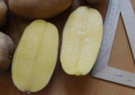 Картофель Инара: характеристики сорта, вкусовые качества, отзывы