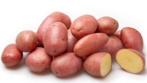 Картофель Белая роза (Беллароза): характеристики сорта, вкусовые качества, отзывы