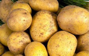 Картофель Метеор: характеристики сорта, отзывы тех, кто сажал