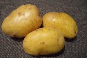 Картофель Кроне (Крона): характеристики элитного сорта, отзывы