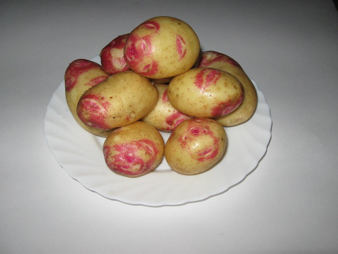 понимали, картошка сорт лимонка описание с фото радостью