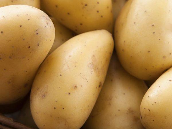 Картофель Гулливер: характеристики сорта, урожайность, отзывы