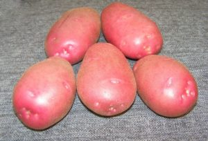 Картофель Любава: характеристики сорта, вкусовые качества, отзывы