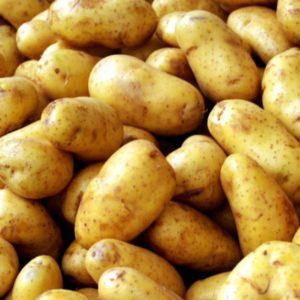 Картофель Зорачка: характеристики сорта, посадка и уход, отзывы