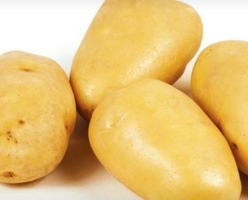 Картофель Зекура: описание сорта, урожайность, фото, отзывы