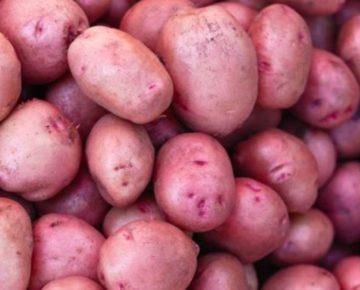 Картофель Кумач: характеристики сорта, агротехника, отзывы
