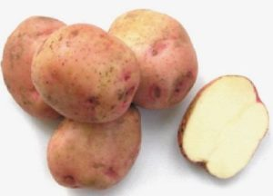 Картофель Ермак: характеристики сорта, урожайность, отзывы