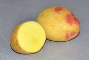 Картофель Лимонка: характеристики сорта, выращивание, отзывы
