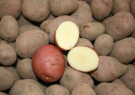 Картофель Романо: характеристики сорта, вкусовые качества, отзывы