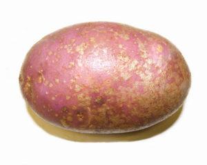 Картофель Ароза: характеристики сорта, вкусовые качества, отзывы