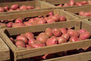 Картофель Дева: характеристики сорта, вкусовые качества, отзывы