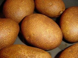Картофель Киви: описание сорта, фото, отзывы, урожайность