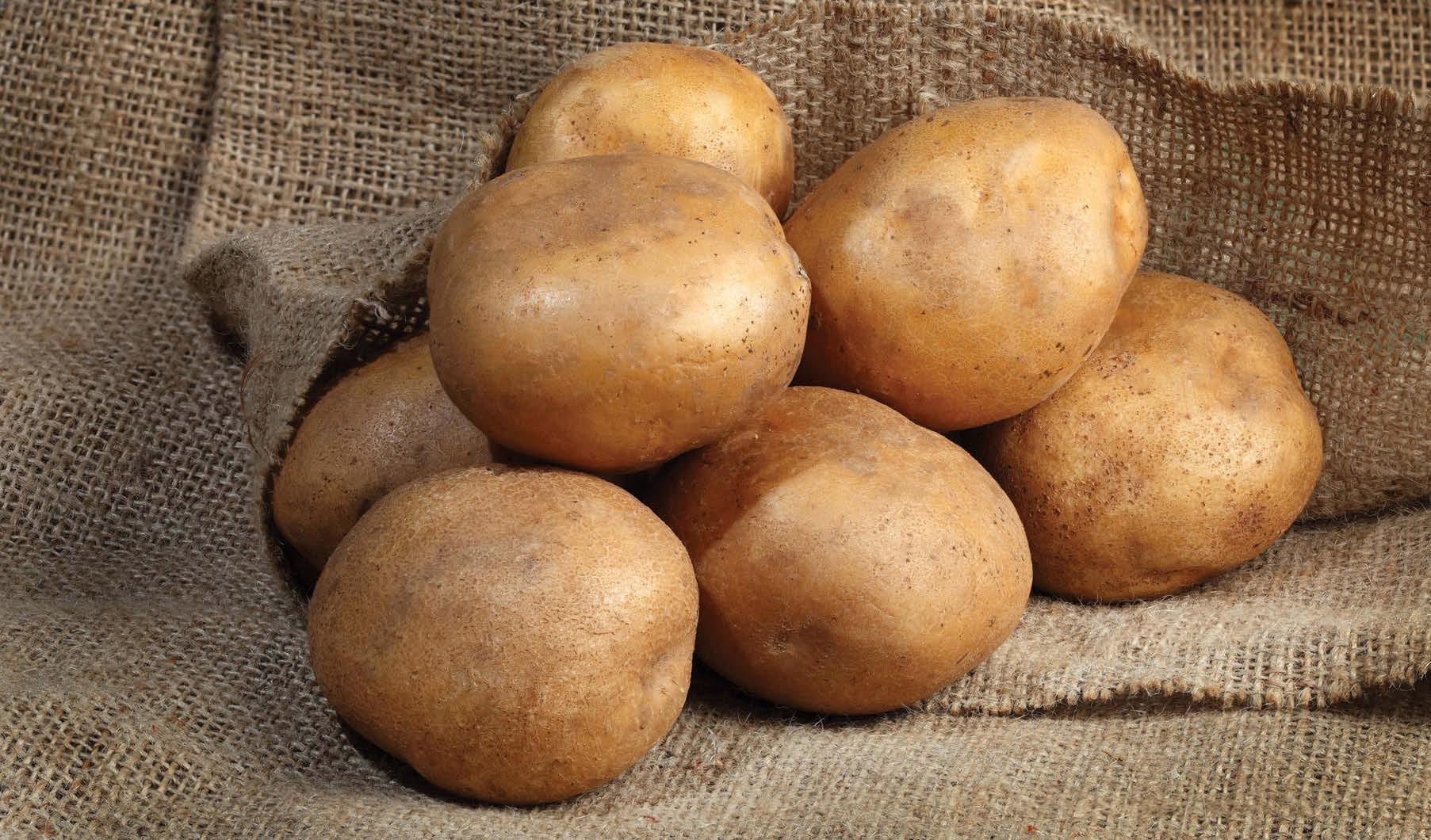 учения картофель сарма описание сорта фото поисках сокровищ