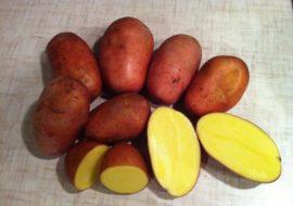 Картофель Изюминка: характеристики сорта, урожайность, отзывы