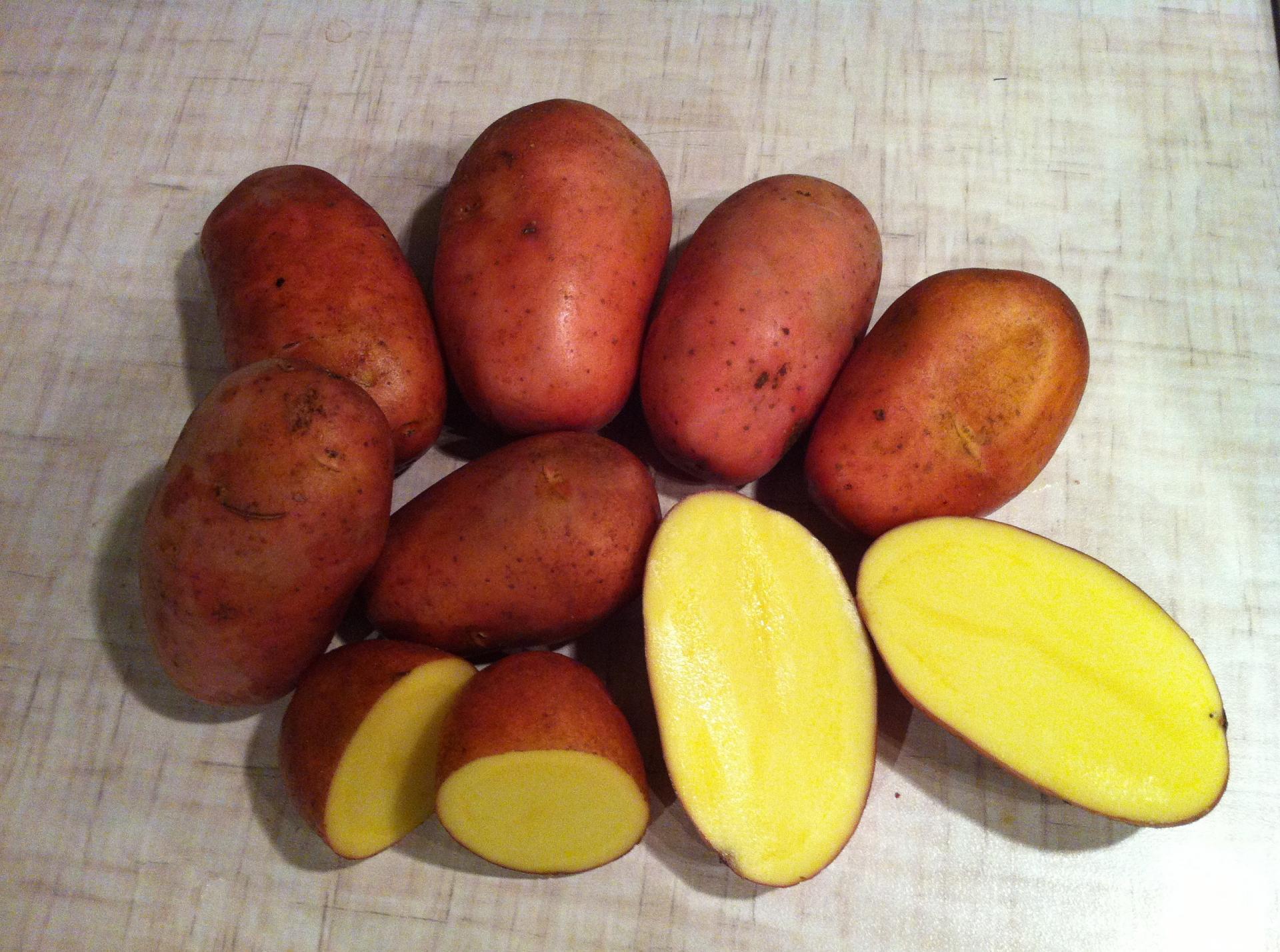 если даже красный картофель сорт фото огромную