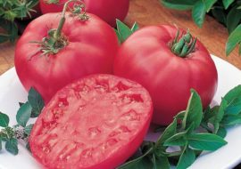Томат Розовый мясистый: характеристика и описание сорта, фото