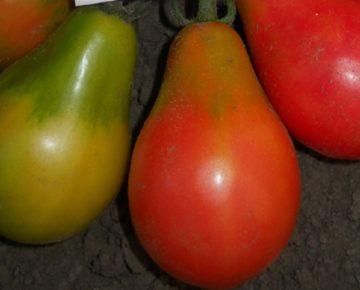 Сорт томата Груша розовая: фото и описание