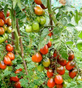 Помидоры Де Барао красный: описание сорта, фото