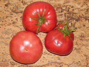 Сорт помидоров Медовый: описание сорта, фото